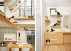 japancathouse1