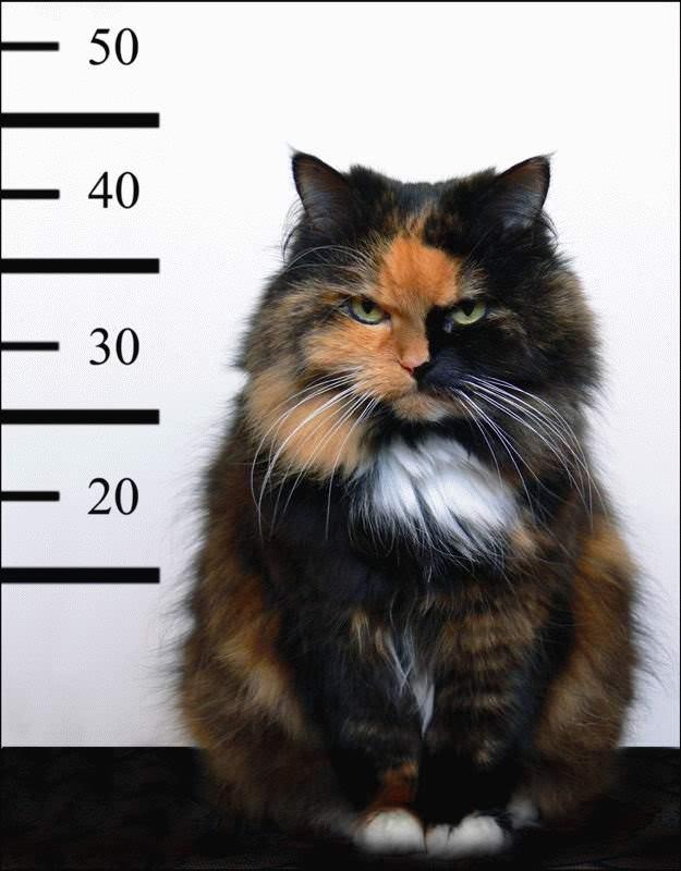 cat burgler