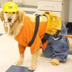 construction dog