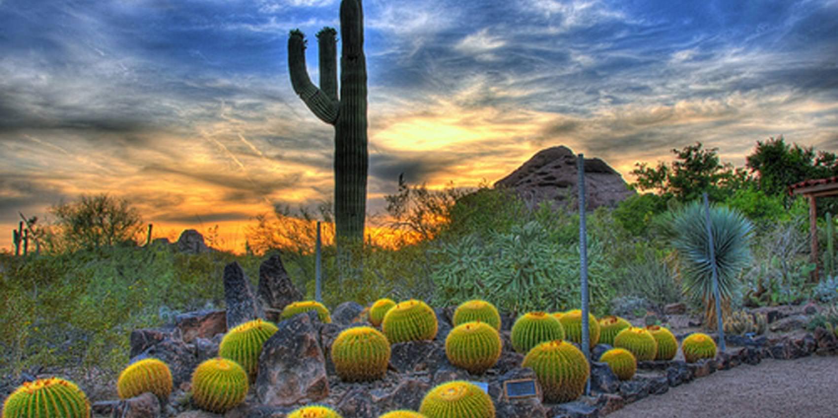 Desert Botanical Garden, Phoenix, AZ Nice Look