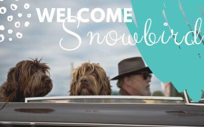 Welcome Snowbirds! It's Winter in Mesa Arizona